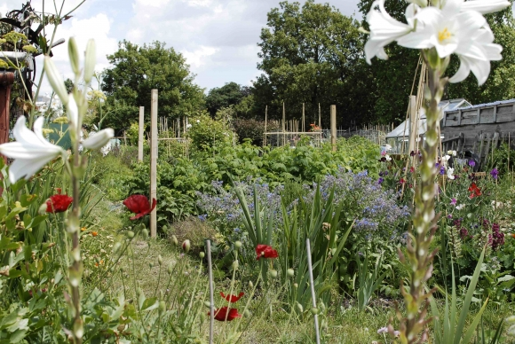 fulham_palace_allotments_3.jpg